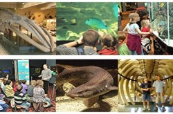 Aquarium-Muséum - image